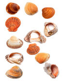 Letter R composed of seashells — Stock Photo