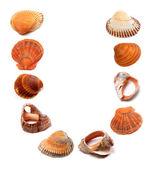Letter U composed of seashells — Stock Photo
