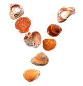 Letter Y composed of seashells — Φωτογραφία Αρχείου
