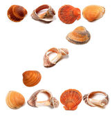 Letter Z composed of seashells — Stock Photo