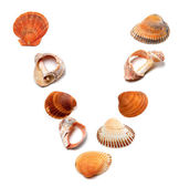 Letter V composed of seashells — Stock Photo