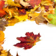 Autumn dry maple leafs — Stock Photo #50955501