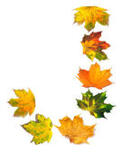 Letter J composed of autumn maple leafs — Stock Photo