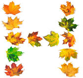 Letter H composed of autumn maple leafs — Stock Photo