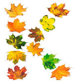 Letter K composed of autumn maple leafs — Stock Photo
