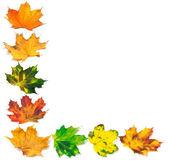字母 l 组成的秋天枫叶 — 图库照片