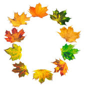 Letter O composed of autumn maple leafs — Stock Photo