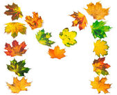 Letter M composed of autumn maple leafs — Foto de Stock