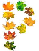 Letra p compuesto de hojas de otoño — Foto de Stock