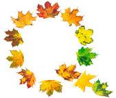 Letter Q composed of autumn maple leafs — Foto de Stock