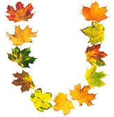 Letter U composed of autumn maple leafs — Foto de Stock