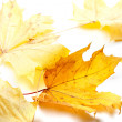 Autumn yellow maple-leafs — Stock Photo #51342323