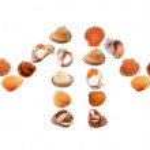 S U M M E R text composed of seashells — Stock Photo #51342375