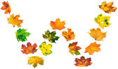 Letter W composed of autumn maple leafs — Stock Photo