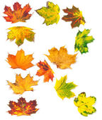 Letter R composed of autumn maple leafs — Stock Photo