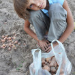 Foto Stock: Child gathering potatoes in field