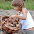 Child reaping potatoes in field — Stockfoto #12724043
