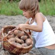 图库照片: Child reaping potatoes in field