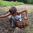 Stockfoto: Children reaping potatoes in field