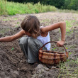 图库照片: Children reaping potatoes in field
