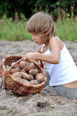 Child reaping potatoes in the field — Stok fotoğraf