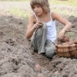 Stock Video: Children reaping potatoes in field