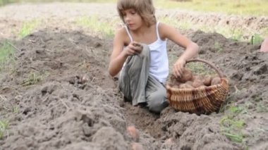 Children reaping potatoes in the field — ストックビデオ