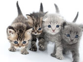 Four kittens walking together — Stock Photo