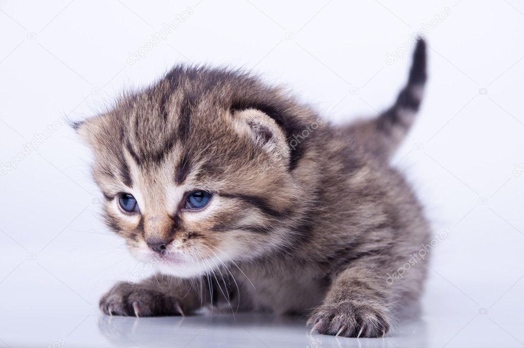 2 周大的可爱小猫室画像– 图库图片