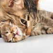 Mother cat taking her kitten by the neck — Stock Photo