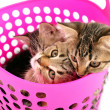 Kittens in a basket — Stock Photo