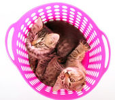Small kittens in a basket — Stock Photo