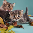 Group of cats in autumn leaves — Stock Photo