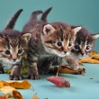 Group of small kittens in autumn leaves — Stock Photo #34675753