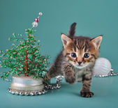 Small kitten among Christmas stuff — Stock Photo