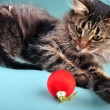 Stock Photo: Mother cat feeding her kitten surrounded with Christmas stuff