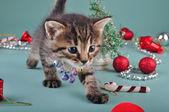 Small kitten among Christmas stuff — Stockfoto