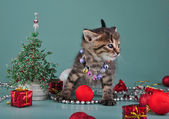 Small kitten among Christmas stuff — Stock fotografie