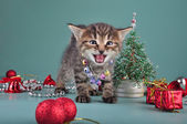 Small kitten among Christmas stuff — Foto Stock