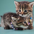Little kittens with small metal jingle bells beads — Stock Photo #35275337