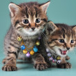 Little kittens with small metal jingle bells beads — Stock Photo