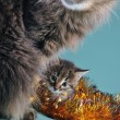 New Year portrait of a little kitten with mother cat — Stock Photo