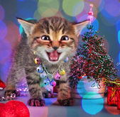 Small kitten among Christmas stuff — Stockfoto