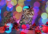 Small kitten among Christmas stuff — Stock Photo