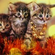 Small  kittens among Christmas stuff — Stock Photo