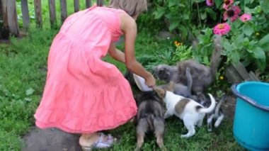 Little girl feeding kittens and puppies — Stock Video