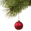 Christmas decoration ball on the firtree — Stock Photo #1007115