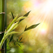 Abstract oriental backgrounds with bamboo foliage — Stockfoto