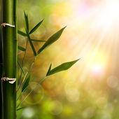 Oryantal arka bambu yeşillik ile — Stok fotoğraf