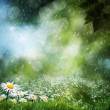 Stock Photo: Daisy flowers under sweet rain, natural backgrounds